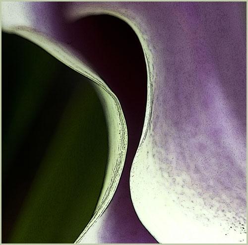 flower260212_14p kopie