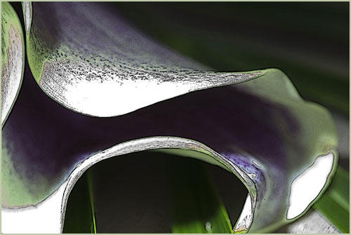 flower260212_15p kopie