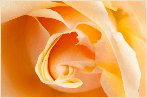 flowerimg_8078 kopie