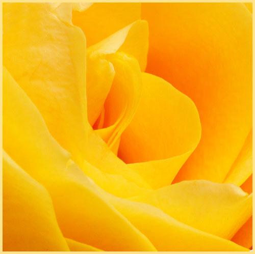 flowerimg_8093 kopie