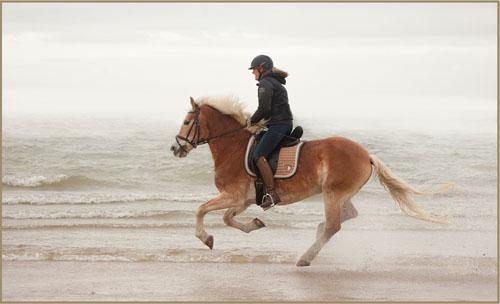 horse3tx kopie