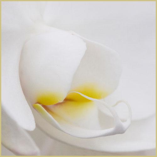 orchideeimg_7054v