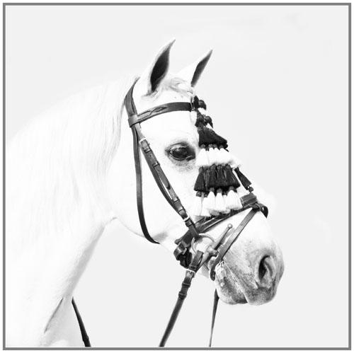 paardenpasen2013img_4148hk kopie
