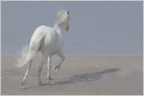 paardenpasen2013img_4209tx kopie