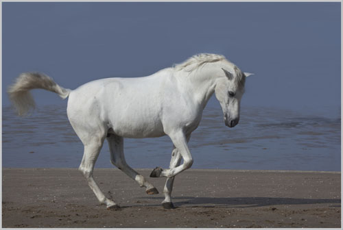 paardenpasen2013img_4211tx kopie