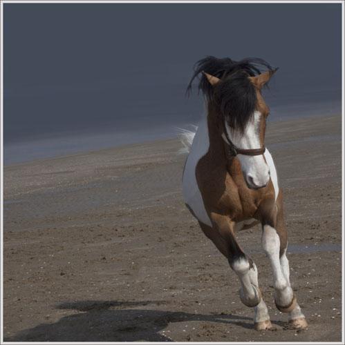 paardenpasen2013img_4224tx kopie