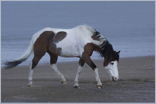 paardenpasen2013img_4230tx kopie