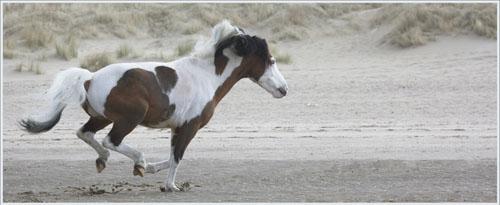 paardenpasen2013img_4238tx kopie