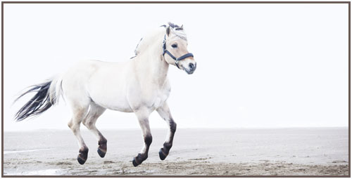 paardenpasen2013img_4267hktx kopie
