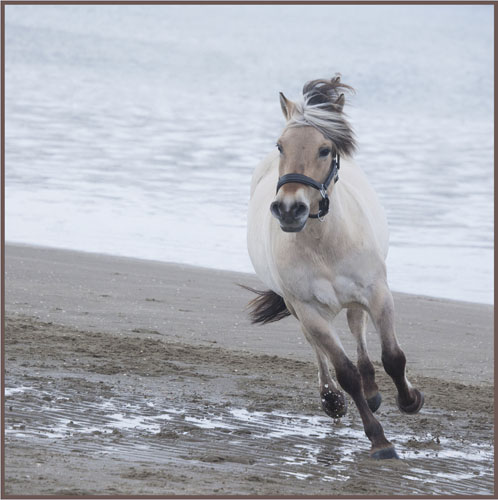 paardenpasen2013img_4270tx kopie