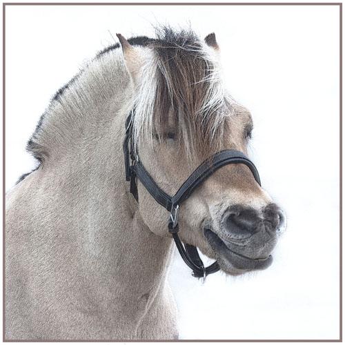 paardenpasen2013img_4289ptx kopie