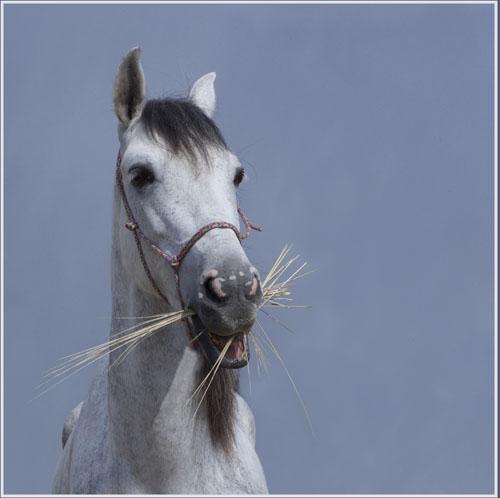paardenpasen2013img_4353tx kopie
