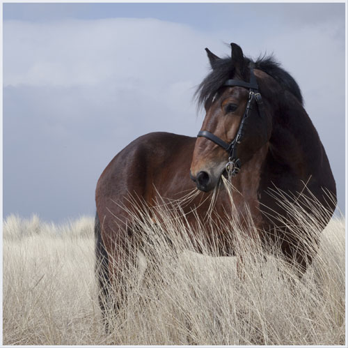 paardenpasen2013img_4360tx kopie