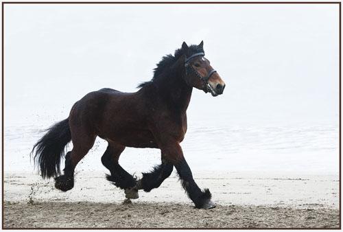 paardenpasen2013img_4450ptx kopie