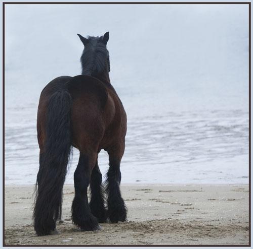 paardenpasen2013img_4477tx kopie