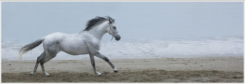 paardenpasen2013img_4494tx kopie