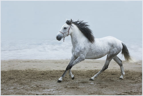 paardenpasen2013img_4510tx kopie