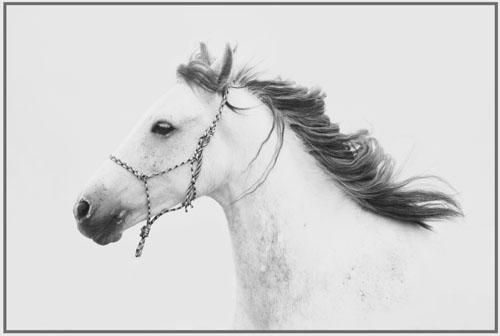 paardenpasen2013img_4517bwtx kopie
