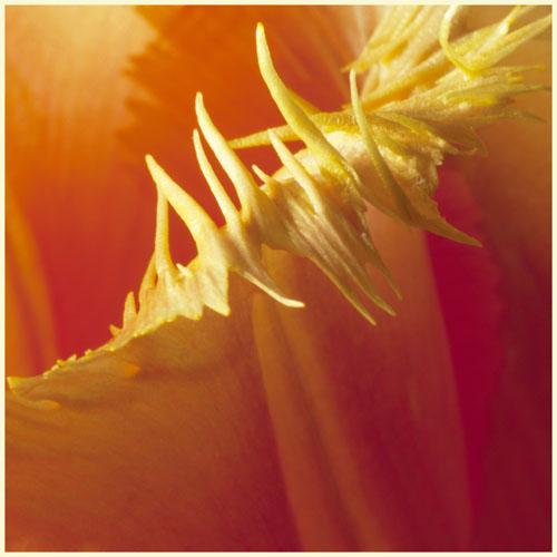 tulipimg_4980 kopie