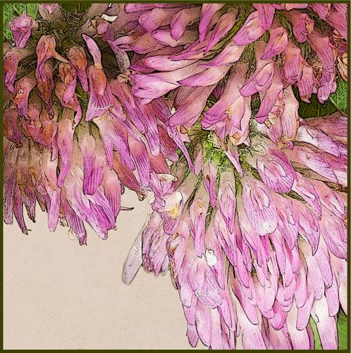 veldbloemen2015img_8752tx
